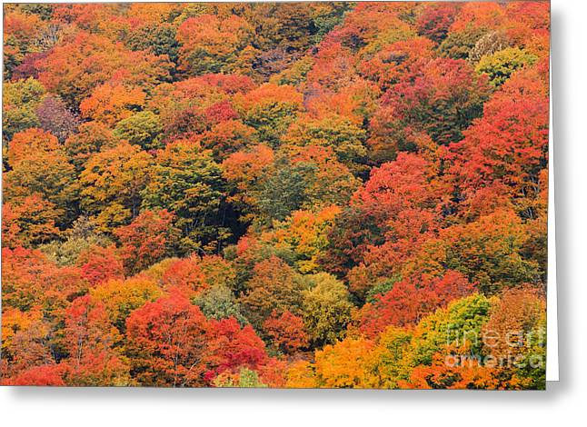 Field Of Trees From Above During Fall Foliage. Greeting Card