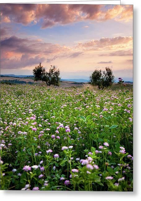 Field Of Wildflowers At Sunset Greeting Card by Brian Jannsen