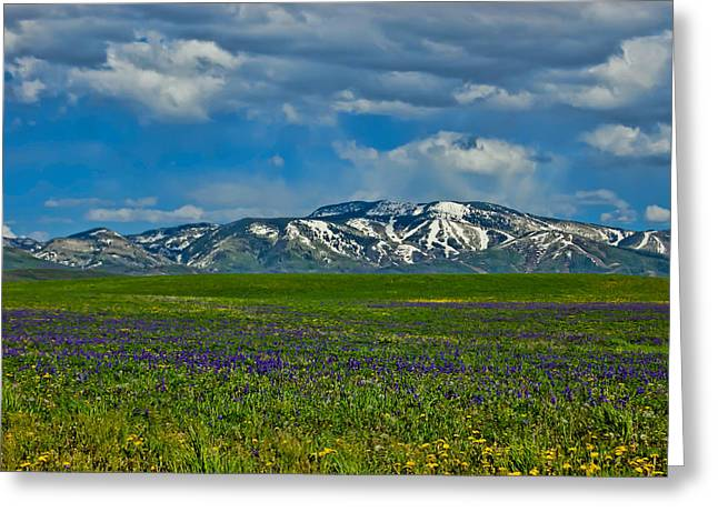 Greeting Card featuring the photograph Field Of Wildflowers by Don Schwartz