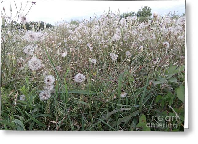 Field Of Youthful Dreams Greeting Card by Joseph Baril
