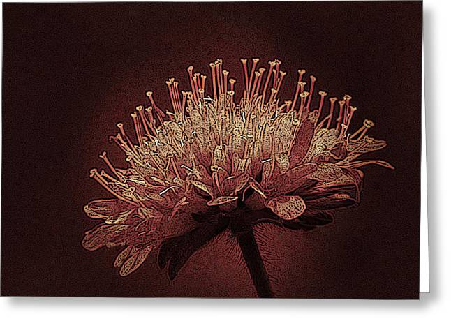 Field Scabious Photographic Art Greeting Card by David Dehner