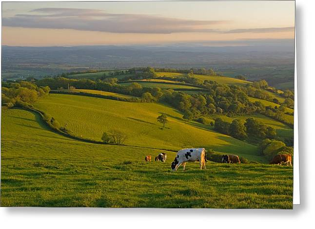 Fields And Cows In Devon Greeting Card