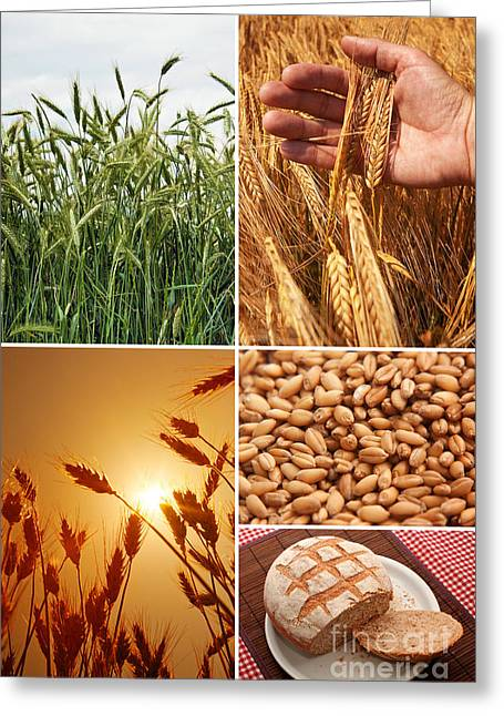 Fields And Grain Collage Art Greeting Card by Boon Mee