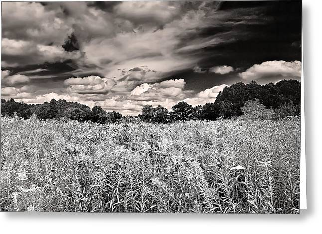 Fields Of Gold And Clouds Greeting Card