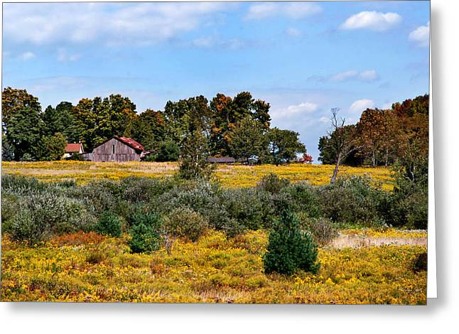 Fields Of Gold Landscape Greeting Card by Christina Rollo