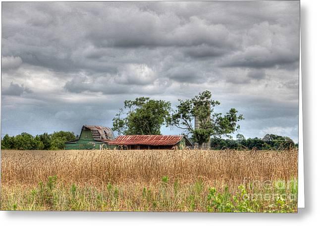 Fields Of Golden Grain Greeting Card by Benanne Stiens