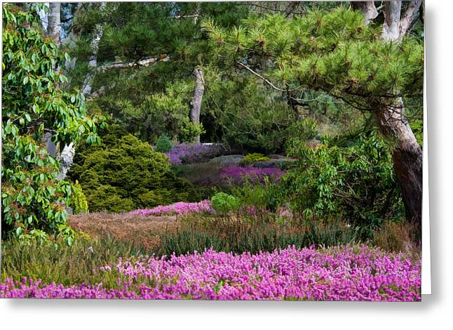 Fields Of Heather Greeting Card