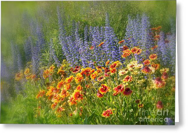 Fields Of Lavender And Orange Blanket Flowers Greeting Card by Lingfai Leung