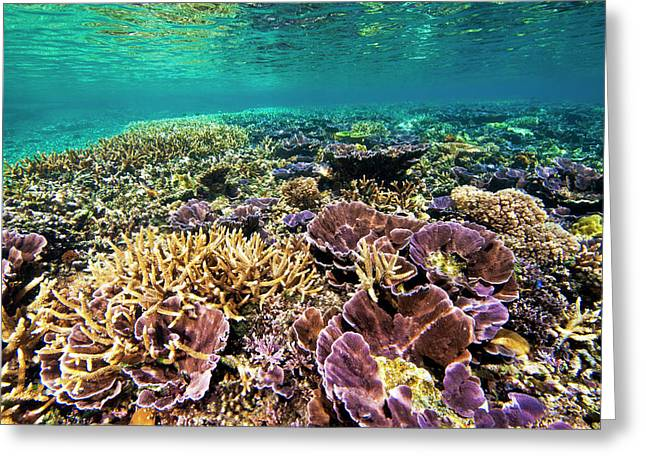 Fields Of Robust Coral Greeting Card