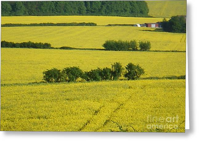 Fields Of Yellow Greeting Card by Ann Fellows