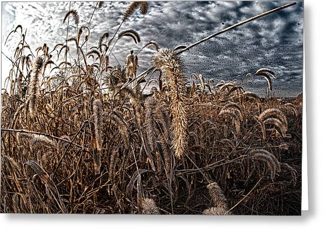 Fierce Grasses Greeting Card