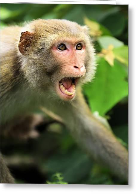 Monkey Of Kam Sham Country Park Greeting Card by Katrina Lau