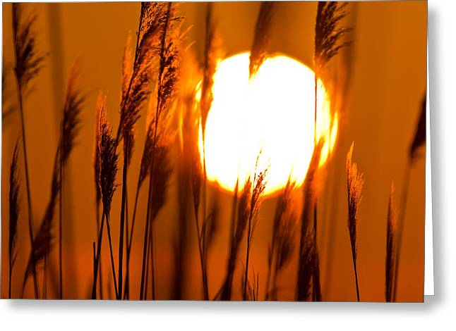 Fiery Grasses Greeting Card