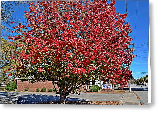 Fiery Tree Greeting Card