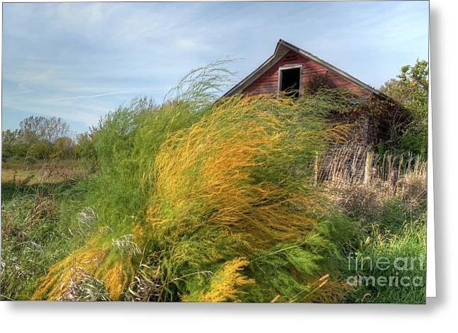 Fiery Weed And Barn Greeting Card