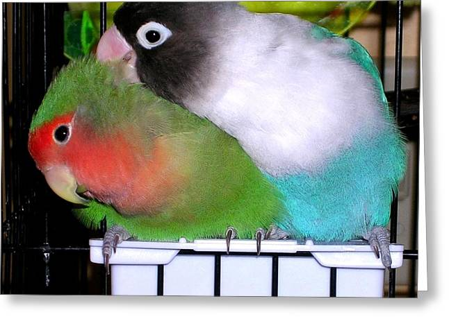 Fifi And Tut Greeting Card