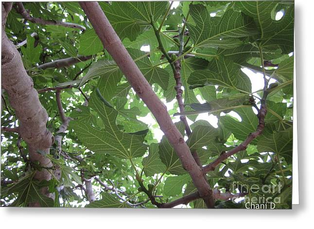 Fig Tree Greeting Card