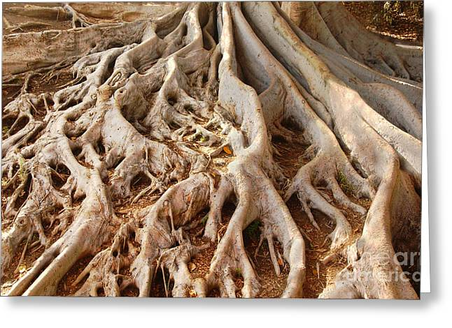 Fig Tree Roots In Balboa Park Greeting Card by Anna Lisa Yoder