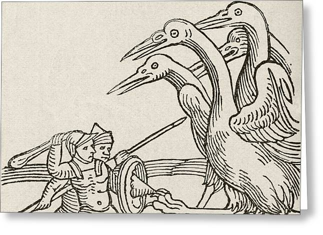 Fight Between Pygmies And Cranes. A Story From Greek Mythology Greeting Card by English School