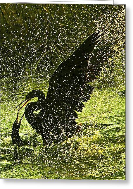 Fighting Anhingas Greeting Card