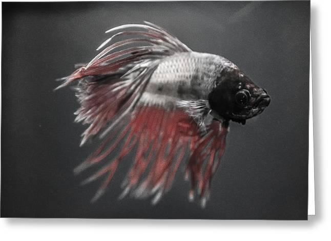 Fighting Fish Greeting Card by Lisa Brandel