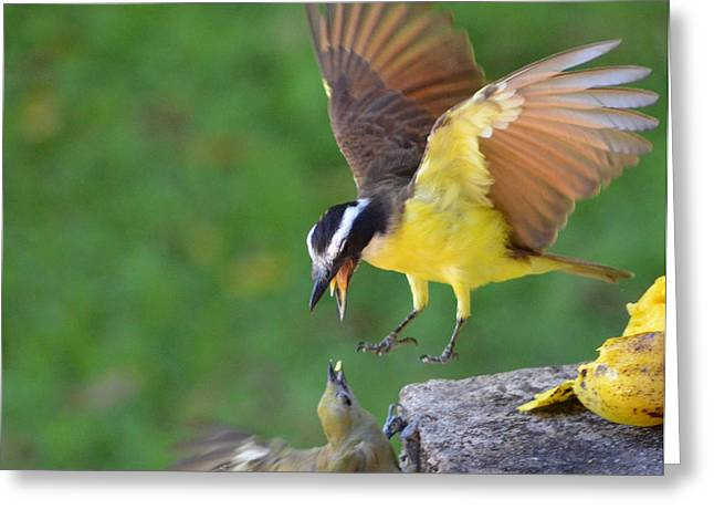 Fighting For Food Greeting Card by Anton Joseph