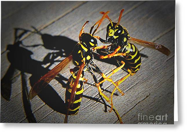 Fighting Hornets Greeting Card by JRP Photography