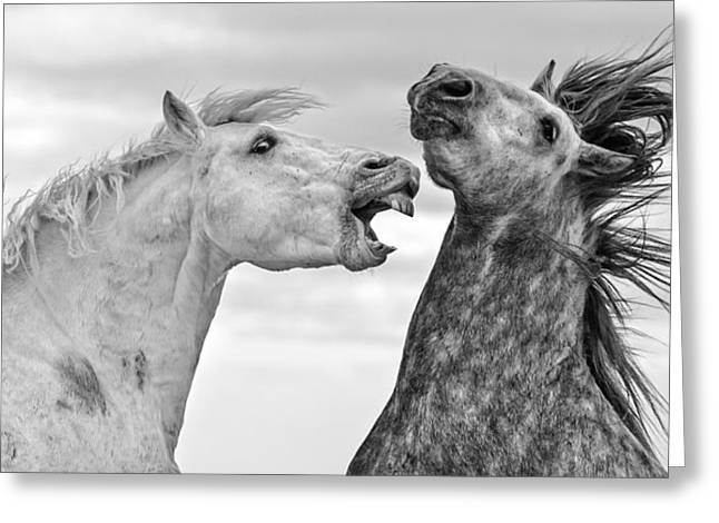 Fighting Stallions Greeting Card