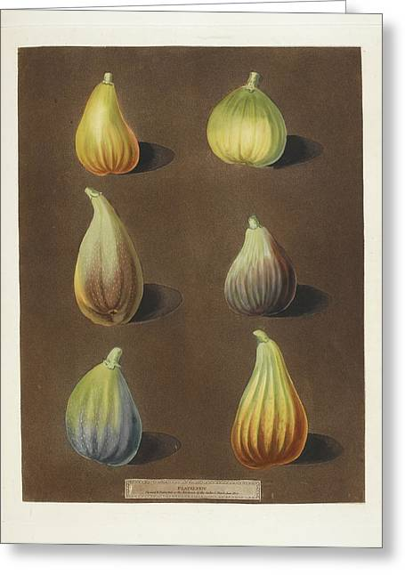 Figs Greeting Card by British Library