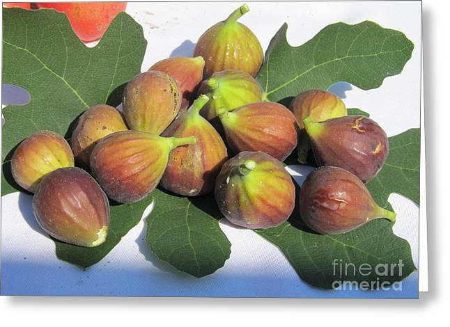 Greeting Card featuring the photograph Figs First Harvest 2012 by Tina M Wenger