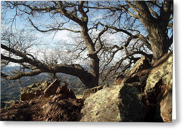 Figueroa  Mountain Trees  Greeting Card by Barbara Snyder