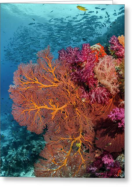 Fiji Fish And Coral Reef Greeting Card by Jaynes Gallery