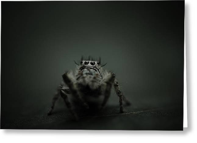 Filbert The Jumping Spider Greeting Card by Shane Holsclaw
