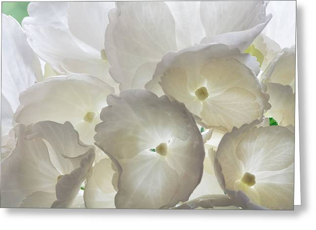 Filtered Light Greeting Card by Shirley Mitchell
