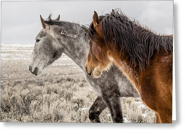 Greeting Card featuring the photograph Finally Free by Yeates Photography