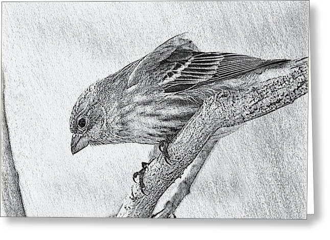 Finch Digital Sketch Greeting Card