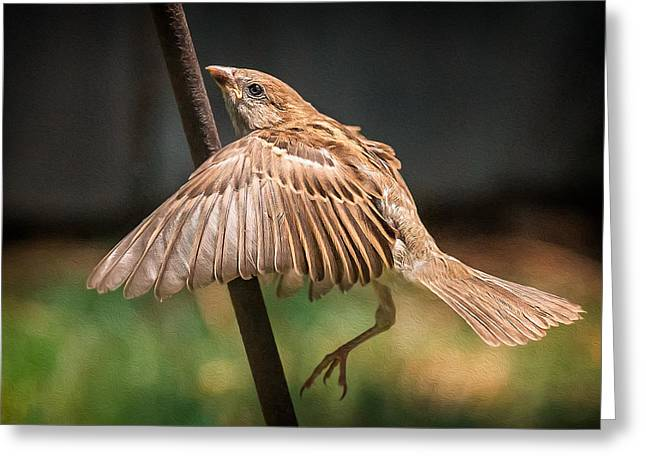Finch In Morning Light Greeting Card