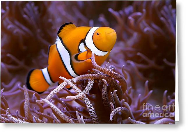 Finding Nemo Greeting Card by Shannon Rogers
