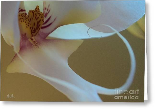 Fine Lines Greeting Card by Geri Glavis