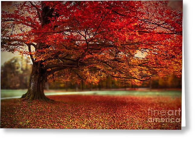 Finest Fall Greeting Card by Hannes Cmarits