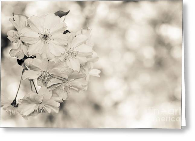 Finest Spring Time - Bw Greeting Card by Hannes Cmarits