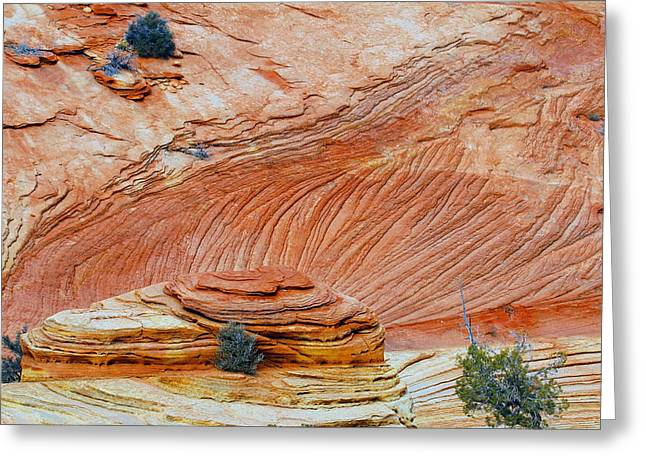 Fins In Zion Canyon Np Greeting Card