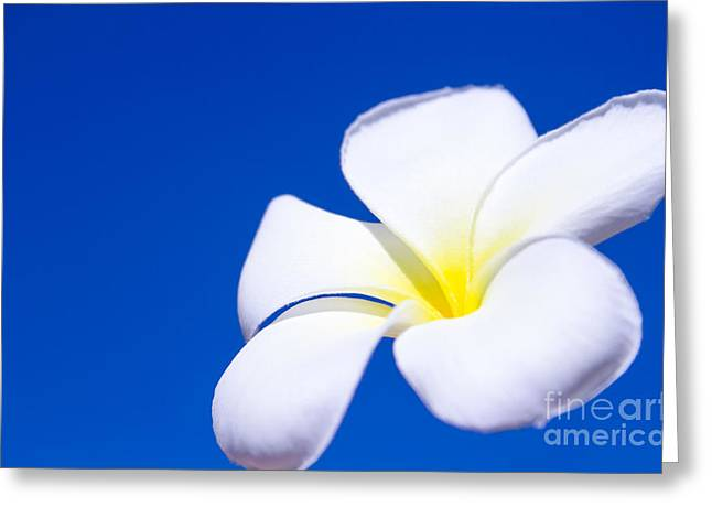 Fiore Nel Cielo - The Blue Dream Of Sky Greeting Card by Sharon Mau