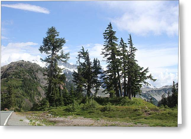 Greeting Card featuring the photograph Fir Trees At Mount Baker by Tom Janca