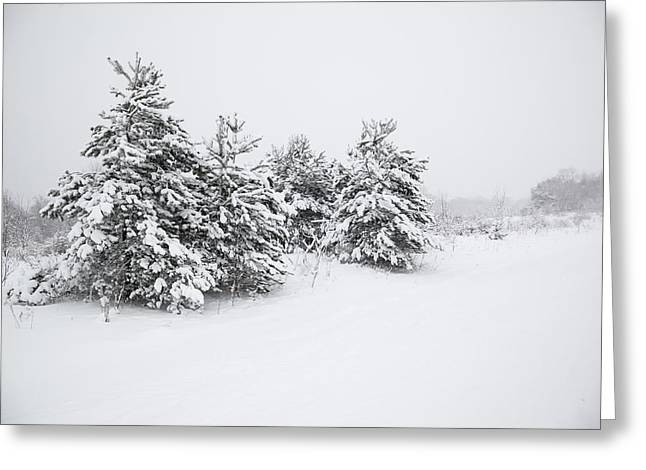 Fir Trees Covered By Snow Greeting Card