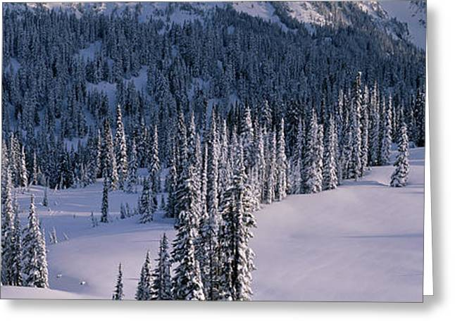 Fir Trees, Mount Rainier National Park Greeting Card by Panoramic Images