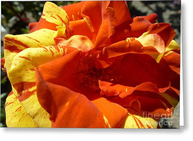 Fire Ball Greeting Card by Anat Gerards