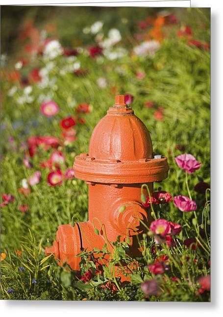 Fire Hydrant & Flowers Kodiak Island Greeting Card by Kevin Smith