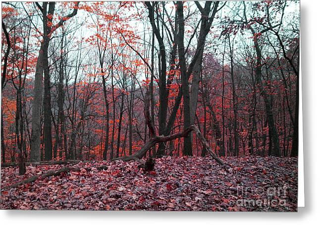 Fire In The Woodland Greeting Card