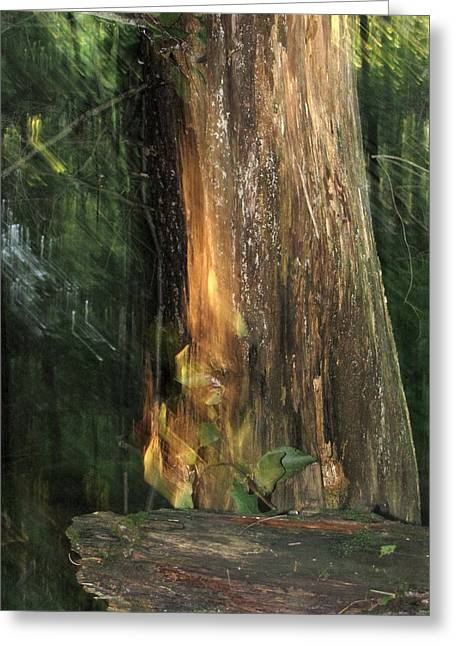 Greeting Card featuring the photograph Fire Leaf by Melissa Stoudt